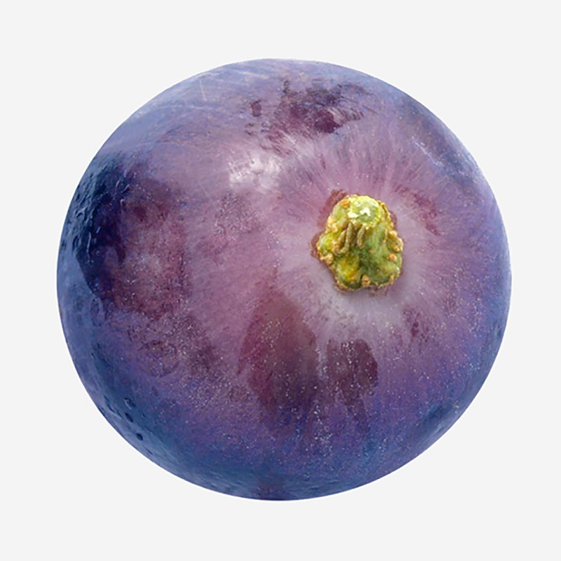 Grape Thumb, Swissbotanic